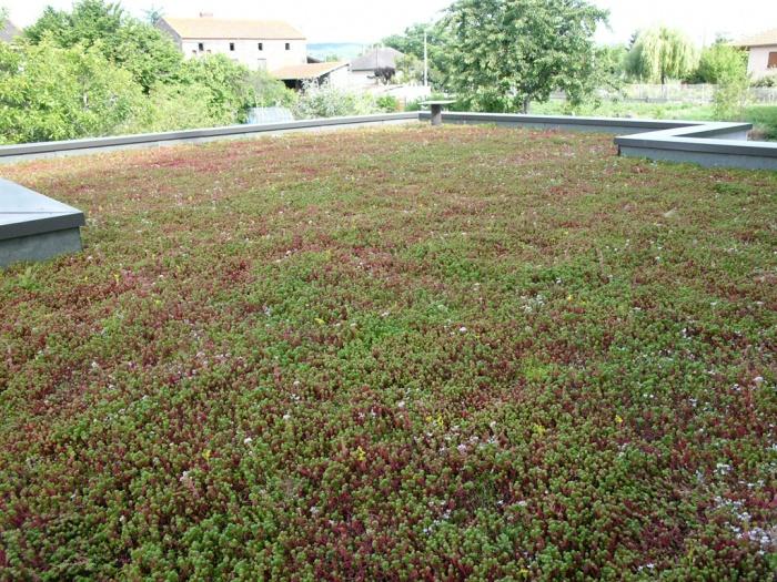 Rénovation et extension écologique très haute performance énergétique. : Toiture terrasse végétalisée